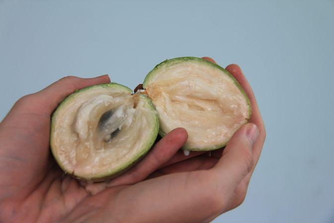 fruits of Vietnam vu sua star apple