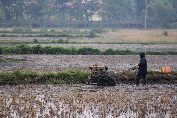 A farmer plowing his field in Tam Coc, Vietnam