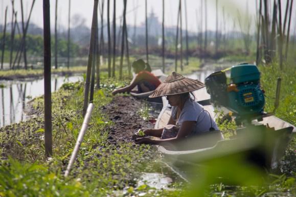 Floating farm on Inle Lake, Myanmar