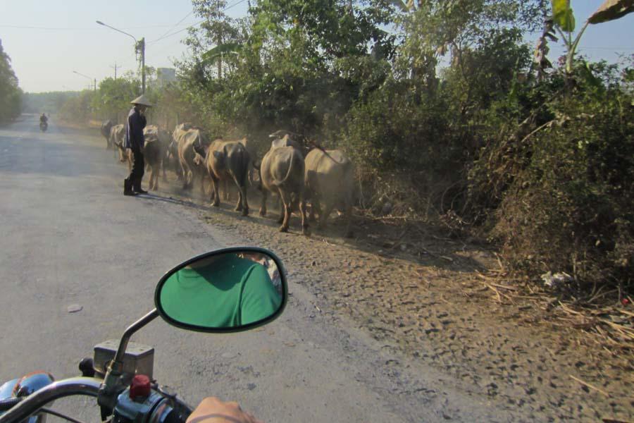 riding to dalat, Vietnam