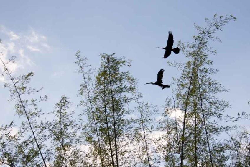 Bird watching at Cat Tien Park