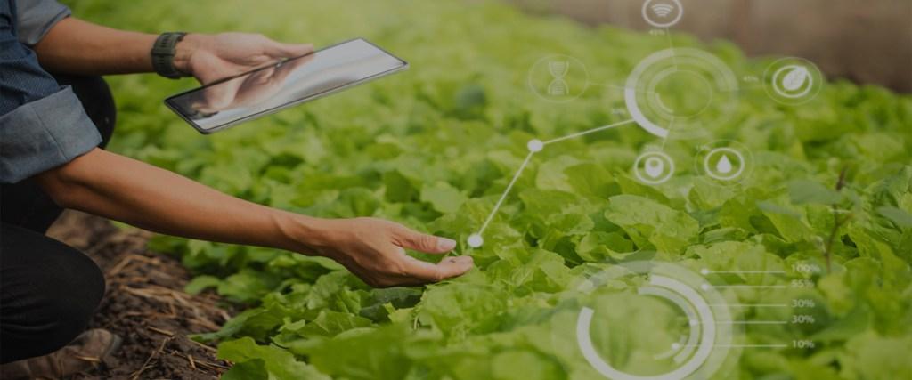 Implementation of Digital Farming Solution & Mobile App