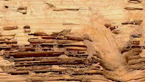 Ataque madera termitas