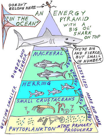 tiger shark life cycle diagram electron dot for al science