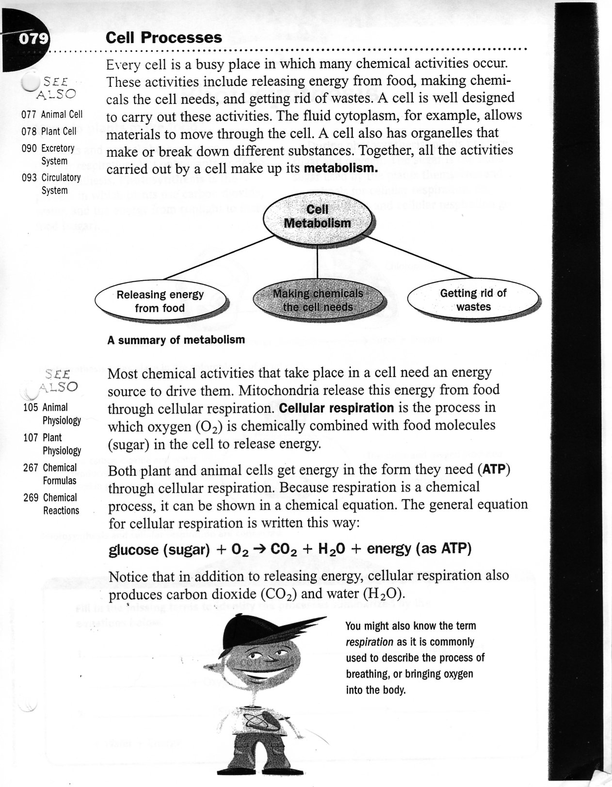 cellular respiration diagram worksheet fetal pig digestive system labeled photosynthesis answers