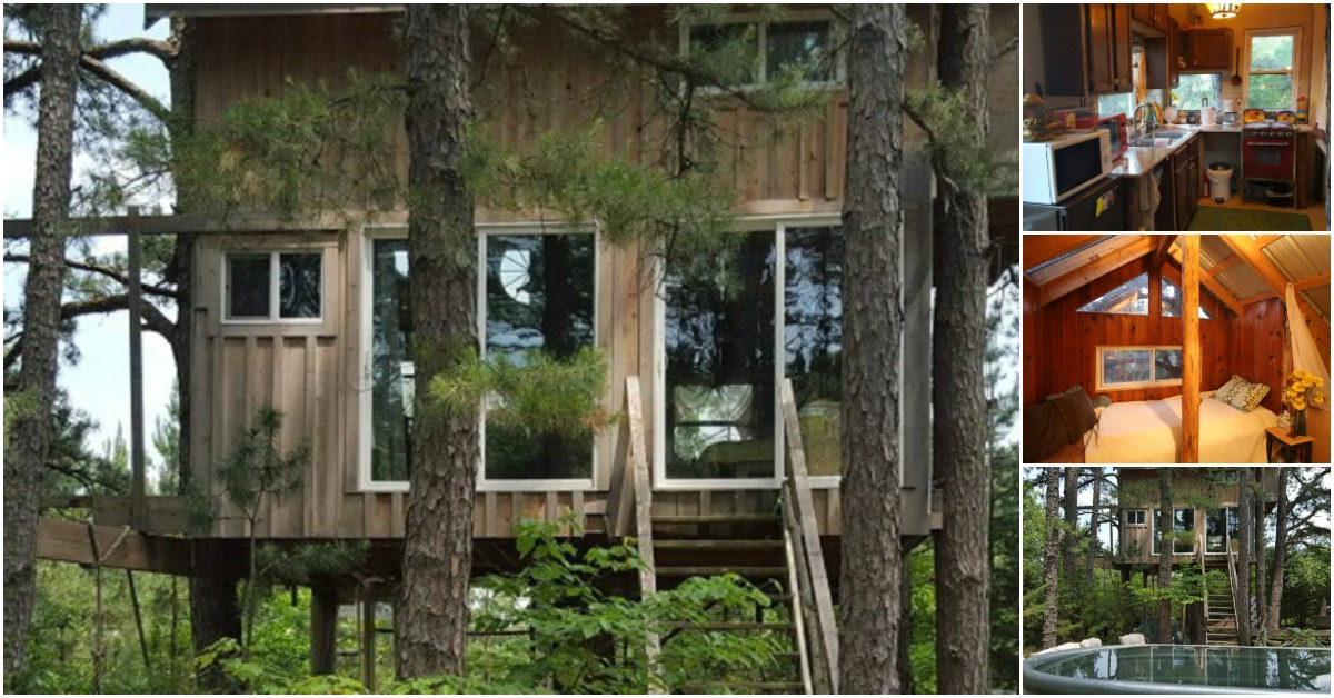 Rent This Cozy Tiny House in the Trees for Your Next Vacation!