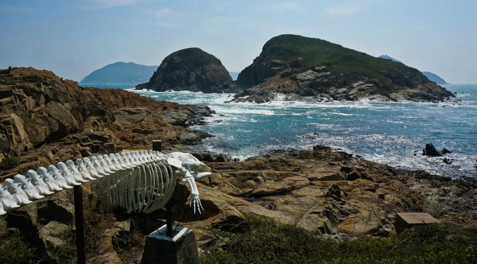 Whale Bone at The Swire Institute of Marine Science (SWIMS), Cape d'Aguilar Peninsula