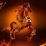Water Horse Wallpaper Hd 1729309 Hd Wallpaper Backgrounds Download