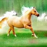 Running Horse Wallpaper Download Beautiful Horses 1893168 Hd Wallpaper Backgrounds Download