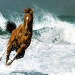 Running Horse On Beach 1894412 Hd Wallpaper Backgrounds Download