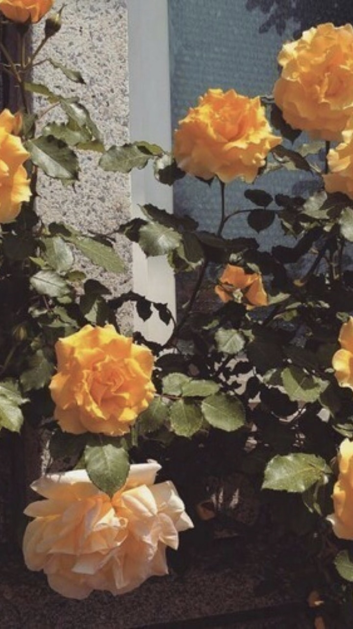 Feel free to use these flower aesthetic pc images as a background for your. Aesthetic, Flowers, And Orange Image - Yellow Flower ...