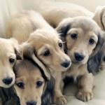 Iphone X Wallpaper Puppy 3250805 Hd Wallpaper Backgrounds Download