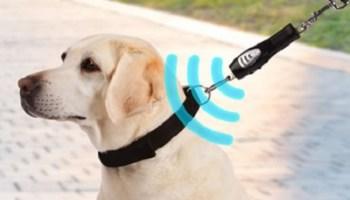 Dog-Ultrasonic-Walking-Trainer