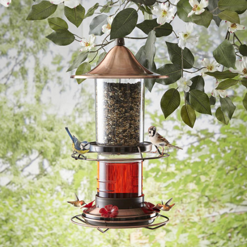 Hummingbird And Song Bird Feeder