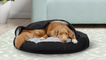 Pets-Recovery-Burrow-Bed