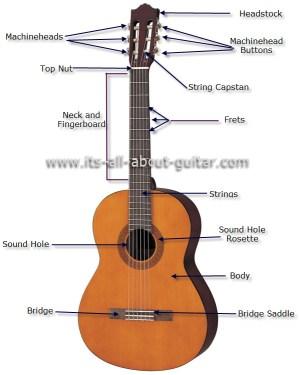 Diagram of a Nylon String Guitar