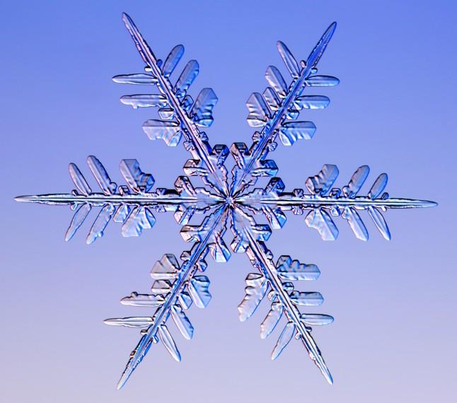 http://www.its.caltech.edu/~atomic/snowcrystals/photos3/w050207a055.jpg