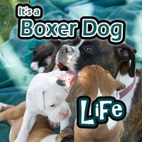 Life With Leah, My First Boxer Dog