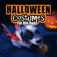 Find Boxer Halloween Costumes for your Big Dog