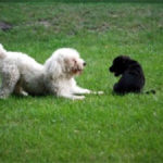 puppysocialization-150x150 Say Hello to My Little Friend!