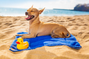 1_Summer-Photo-300x200 It's A Hot One! Summer Tips on Keeping Dogs Cool & Comfortable