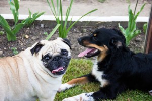 Dog-Talk-300x200 Why Socialization Is Vital to Healthy & Happy Pups