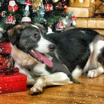 Holiday-Dog-150x150 Holiday Pet Photography Do's and Don'ts