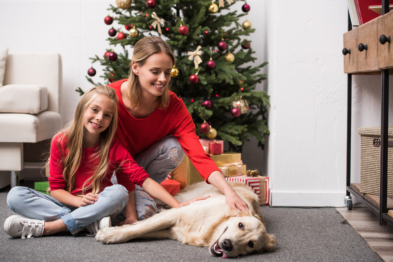Holiday-blog Holiday Pet Photography Do's and Don'ts