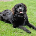 Big-Breeds-150x150 What's In A Name? Tips For Teaching Your Pet to Come When Called
