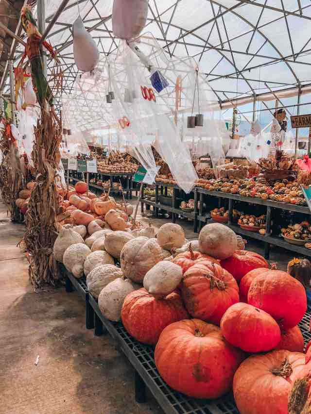 Houston Pumpkin Patch