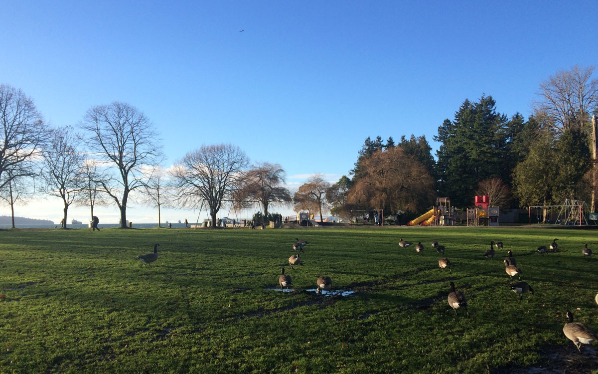 Birds at Stanley Park English Bay Vancouver It's All Well + Good Magazine
