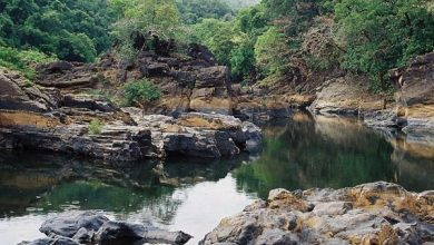 Photo of Netravali: A nature lover's paradise in our backyard