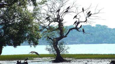 Photo of Batim Lake: a haven for bird watching enthusiasts