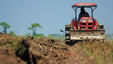 Photo of Are Goan farmers going extinct?