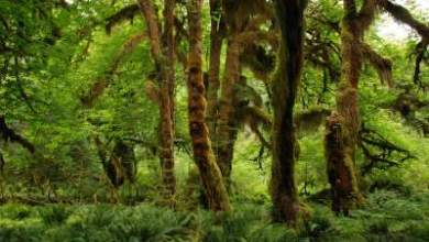 Photo of 93 Sacred Groves of Goa