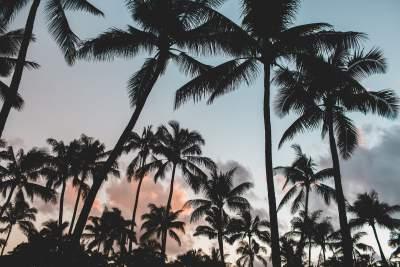 https://pixabay.com/static/uploads/photo/2016/02/19/10/18/palm-trees-1209163_960_720.jpg