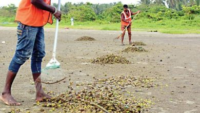 Photo of GTDC: Goan youth to be hired for beach cleaning