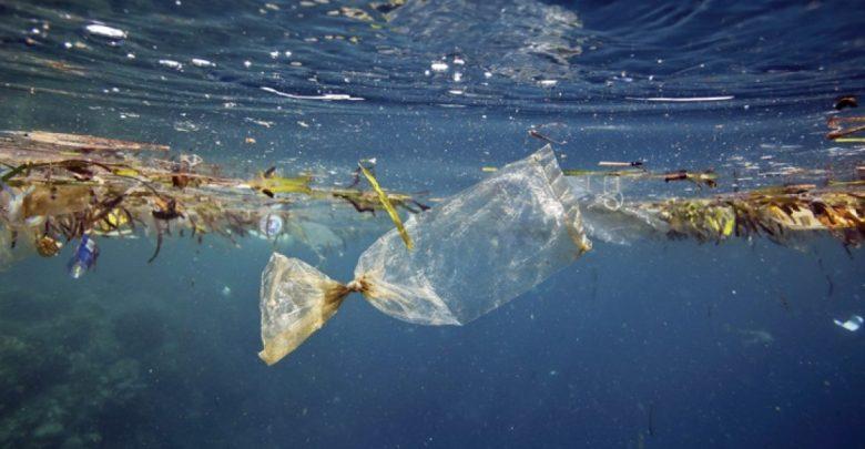 micro plastics, micro plastics contaminate seafood in Goa
