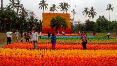 Photo of Carpet of Joy- An installation by Doctor Subodh Kerkar