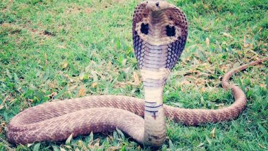 Photo of Snake vomits entire plastic bottle in Goa