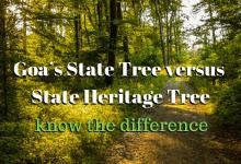 State versus Heritage Tree