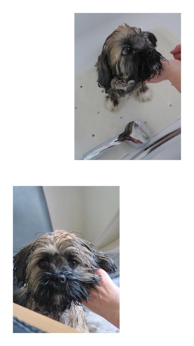 Puppy Updates - Teddy's 4 Month Update