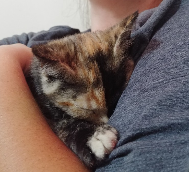 Calico cat cuddled in womans arm