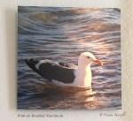 Seagull, beach, sea, aluminum print