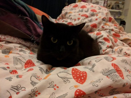 the spicy bean - a black cat lays nestled amongst a very comfy quilt