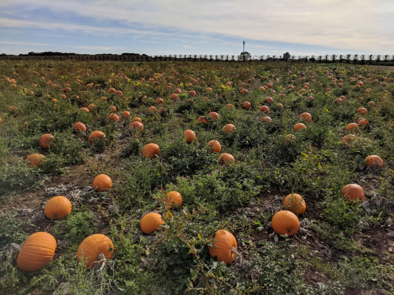 Blogtober Day 7: Visiting the Pumpkin Patch