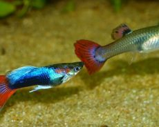What you should consider and think before purchasing Aquarium fish online ?