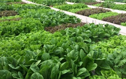 Advantages of #Aquaponic Farming