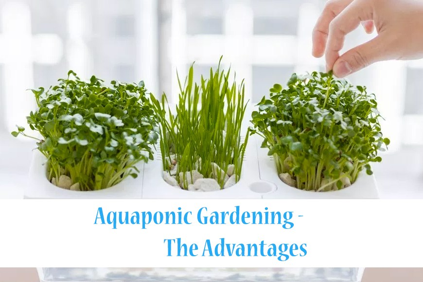 Aquaponic Gardening – The Advantages