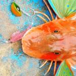 Red gurnard (searobin) on pink glitter shrimp 087